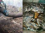 jenis-ular-piton-yang-fotonya-viral-karena-terbakar-disebut-mirip-anaconda.jpg