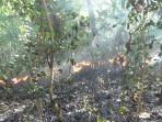 jombang-kebakaran-hutan-jati_20180722_214110.jpg
