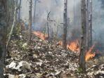 kebakaran-hutan-di-trenggalek.jpg