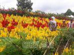 khofifah-indar-parawansa-menikmati-panorama-kebun-agro-expo-banyuwangi.jpg