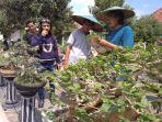 kontes-bonsai-petung_20170830_195539.jpg