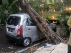 lamongan-mobil-nahas-tertimpa-pohon-tumbang.jpg