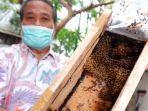 lebah-madu-klanceng.jpg
