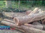 limpahan-kasus-illegal-logging-lamongan.jpg