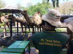 merekam-aktivitas-satwa-untuk-tayangan-virtual-family-surabaya-zoo.jpg