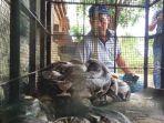 mojokerto-ular-sanca-kembang_20180713_182728.jpg