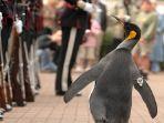 nils-olav-si-penguin_20180509_163711.jpg