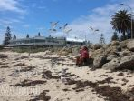 pantai-australia_20171024_092404.jpg