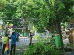 pemotongan-pohon-di-kawasan-perkotaan-tuban.jpg