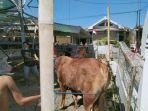 penyembelihan-sapi-hewan-kurban-yang-sempat-terlepas-dan-ngamuk-di-rumah-makan.jpg