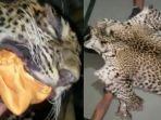 perajin-reog-ngawi-ditangkap-polisi-karena-pakai-kulit-macan-tutul-asli.jpg