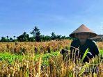 petani-di-lumajang.jpg