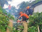 petugas-bpbd-bondowoso-tengah-melakukan-evakuasi-pohon-tumbang.jpg