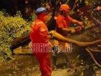petugas-bpbd-kabupaten-tuban-mengevakuasi-pohon-tumbang.jpg
