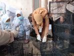 petugas-dari-dinas-kesehatan-bondowoso-bersama-bbtklpp-surabayamempersiapkan-jebakan-tikus.jpg