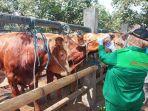 petugas-memeriksa-kondisi-kesehatan-sapi-yang-dijual-di-pasar-hewan-dimoro-kota-blitar.jpg