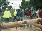 petugas-memotong-batang-pohon-tumbang.jpg