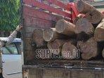 pohon-sonokeling-yang-ditebang-oleh-para-pelaku-ilegal-logging.jpg