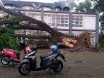 pohon-trembesi-besar-di-area-kampus-undar-jombang-tumbang.jpg