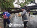 pohon-tumbang-di-desa-magersari-kecamatan-plumpang.jpg