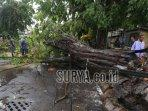pohon-tumbang-di-kawasan-jl-simolawang-surabaya.jpg