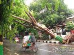 pohon-tumbang-di-tuban.jpg