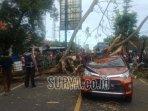 pohon-tumbang-merah-dajah-kecamatan-tanah-merah-kabupaten-bangkalan.jpg