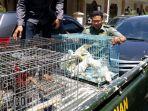 polisi-tangkap-pedagang-cendrawasih-di-sidoarjo_20180406_184250.jpg