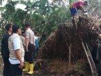 proses-pembersihan-pohon-tumbang-di-kecamatan-arjasa-kabupaten-jember.jpg