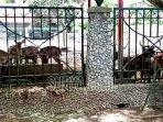 rusa-hewan-koleksi-pendopo-kabupaten-tulungagung-yang.jpg