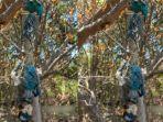 sejumlah-spesies-burung-dilindungi-ditemukan-dalam-kondisi-mati-tergantung.jpg