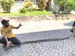 sejumlah-warga-perumahan-griya-suci-permai-gsp-gresik-mengamankan-ular-piton.jpg