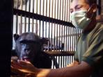 simpanse-koleksi-kebun-binatang-surabaya_20150504_233744.jpg
