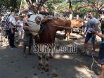 suasana-di-pasar-hewan-tulungagung-desa-beji-kecamatan-boyolangu.jpg