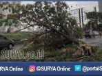 surabaya-pohon-tumbang_20170307_223045.jpg