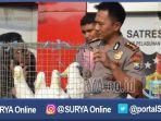 surabaya-polres-perak-amankan-satwa_20170224_194119.jpg