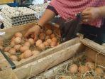 telur-ayam-yang-dijual-di-pasar-karangmenjangan-surabaya.jpg