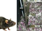 tikus-gerogoti-uang-di-atm_20180620_192922.jpg