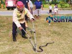 ular-kobra-muncul-di-bojonegoro.jpg