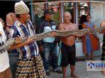 ular-piton-lamongan_20180803_132622.jpg