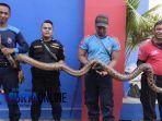 ular-piton-simokerto.jpg