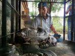 ular-sanca-kembang-di-mojokerto_20180716_153926.jpg