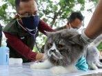 vaksinasi-rabies-gratis-untuk-hewan-peliharaan-digelar.jpg
