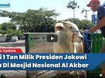 video-sapi-presiden-joko-widodo-di-masjid-al-akbar-surabaya.jpg
