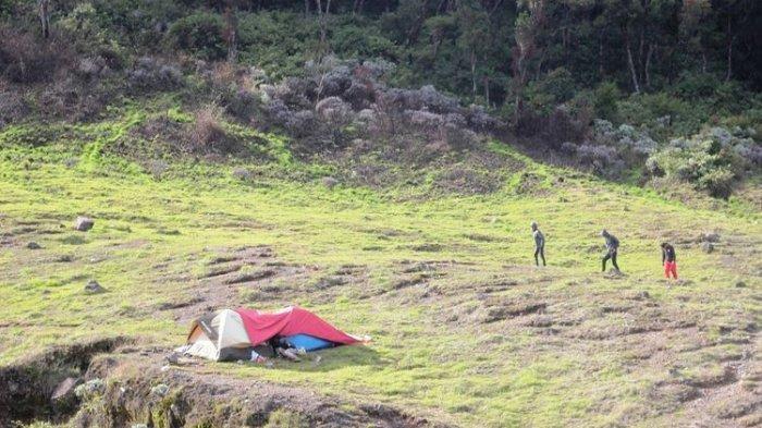 Alun-Alun Suryakancana Taman Nasional Gunung Gede Pangrango (TNGGP) Jawa Barat.