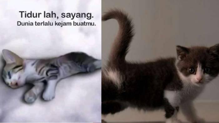 Viral 3 Cewek Injak Anak Kucing Sampai Mati Ternyata 4 Kondisi Kejiwaan Ini Bisa Jadi Penyebabnya Surya Malang