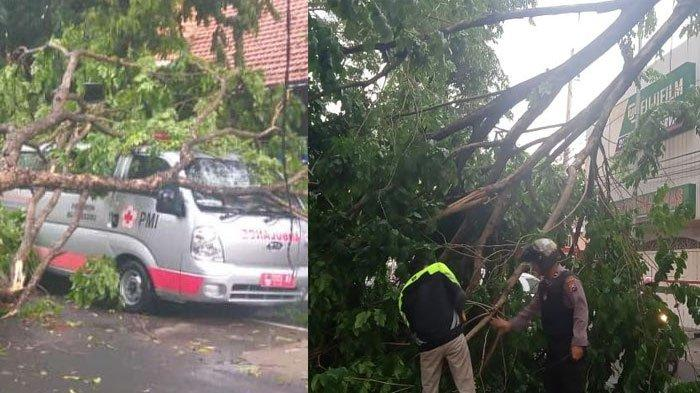 Angin Kencang Terjang Bojonegoro Sore ini, Sejumlah Rumah Rusak dan Belasan Pohon Tumbang