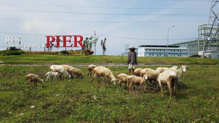 Investasi Jeblok, Pengangguran Terbuka Di Kabupaten Pasuruan Meningkat Tajam