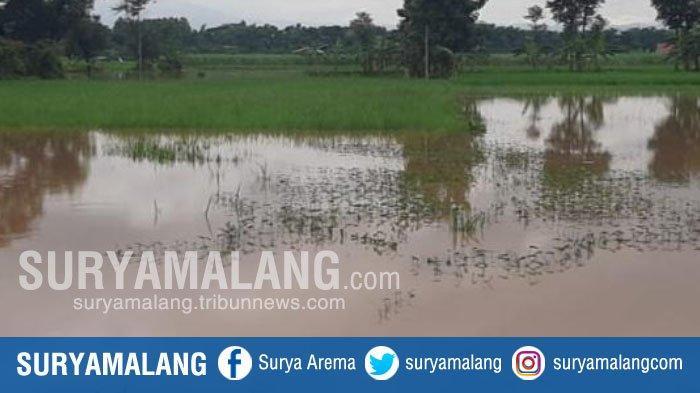 Banjir Rendam Area Persawahan Seluas 83 Hektare di Ponorogo
