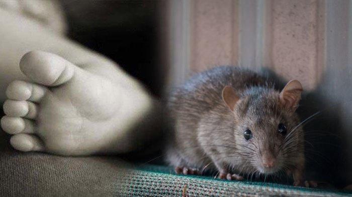 Bayi Digigit Tikus Saat Tertidur Bikin Geger Warga Bogor, Kondisinya Saat Ditemukan Buat Prihatin
